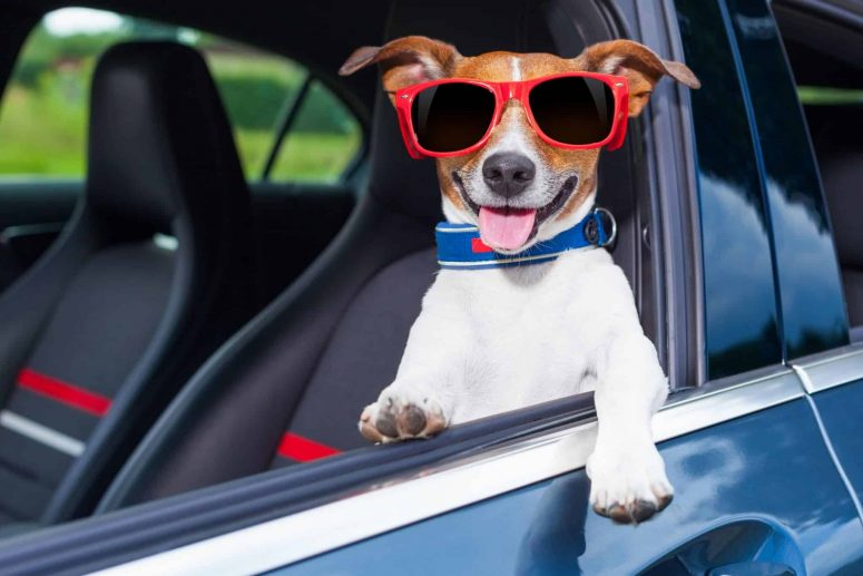 Is It More Dangerous Driving With Pets in The Car?