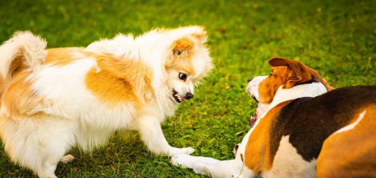 2 dogs fighting causing injury
